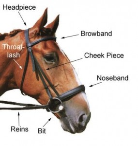 English Bridle Parts